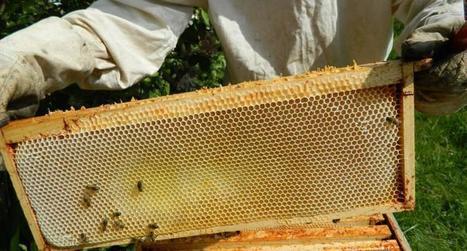 Miel : Nouvelles formations pour les apiculteurs professionnels | Filière apicole française | Scoop.it