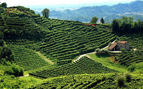 Prosecco: A toast to Italy's finest fizz | Italia Mia | Scoop.it