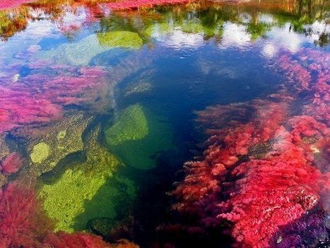 Колумбия. Пятицветная река | МИР ТУРИЗМА | Биология | Scoop.it