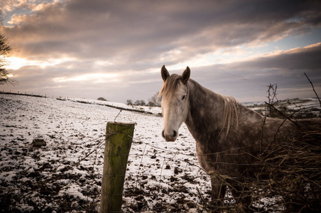 Dromara Snow : Slieve Croob with the Fujifilm X-T1 | Fujifilm X | Scoop.it