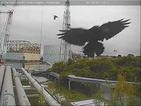 [Photos] Webcam Tepco Select | Facebook | Japon : séisme, tsunami & conséquences | Scoop.it