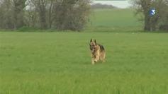 Varades : votre chien est-il un grand nez ? - France 3 Pays de la Loire | CaniCatNews-actualité | Scoop.it