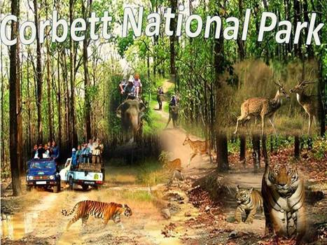 Witness the Wilderness of Corbett National Park with Golden Triangle Tour | Taj Mahal Tours India | Scoop.it