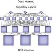 Deep learning | Plant Genomics | Scoop.it