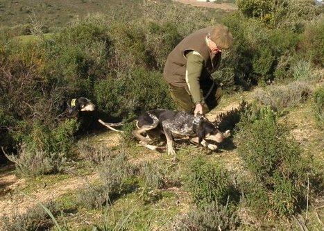 Le Solitaire bonifacien appelle à la mobilisation   chasse   Scoop.it