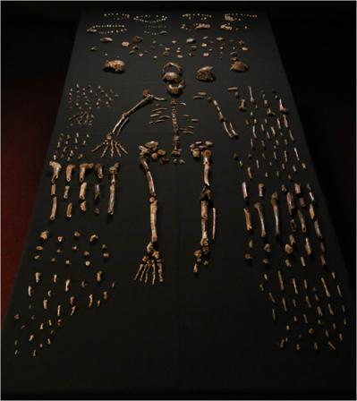 Meet H. Naledi, a Long-Lost Ancestor | STEM Connections | Scoop.it