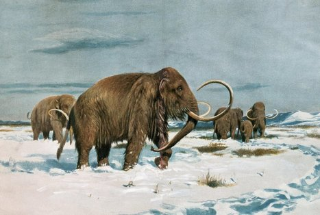 The Last Wooly Mammoths Died Isolated and Alone | Vloasis sci-tech | Scoop.it