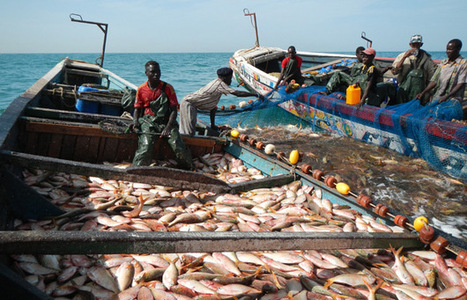 The Saharan nation of ocean fishermen | It Comes Undone-Think About It | Scoop.it