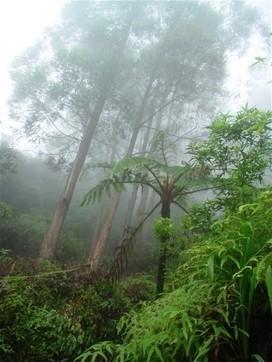 Protection des animaux sauvages en voie de disparition | CERZA Conservation | espèces en voie de disparition | Scoop.it