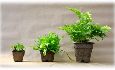 Changement climatique et horticulture | HORTICULTURE BOTANIQUE | Scoop.it