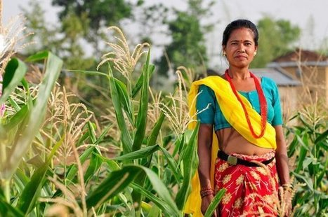 one agriculture cooperative's success story in Nepal - CCAFS - cgiar | climate change nepal | Scoop.it