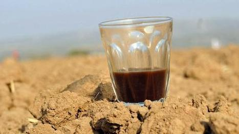 Do coffee and tea really dehydrate us? | Health411 | Scoop.it