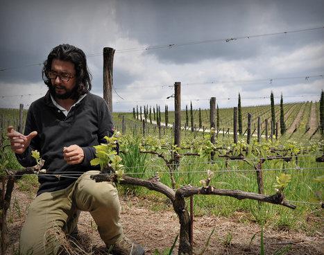 Vignaiolo in Cortona, Toscana - Stefano Amerighi   Learn Italian OnLine   Scoop.it