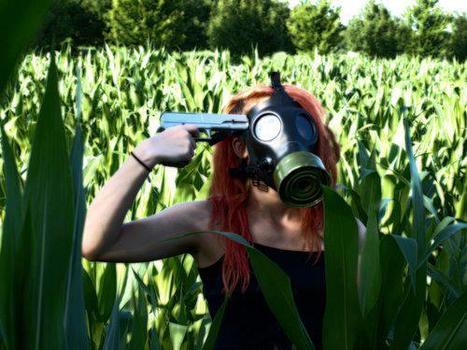 Abeilles et pesticides : c'est notre modèle agricole qui est en cause - Le Nouvel Observateur | Abeilles, intoxications et informations | Scoop.it