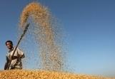 Production céréalière mondiale en progression de 8 pour cent en 2013 - FAO | AgInterest | Scoop.it