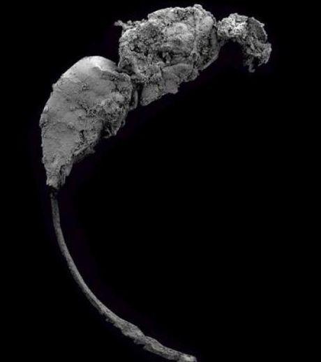 Une nouvelle et énigmatique espèce de guêpe fossile | EntomoNews | Scoop.it