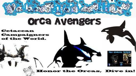 Honor the Orcas, dive in.   #OrcaAvengers   Scoop.it