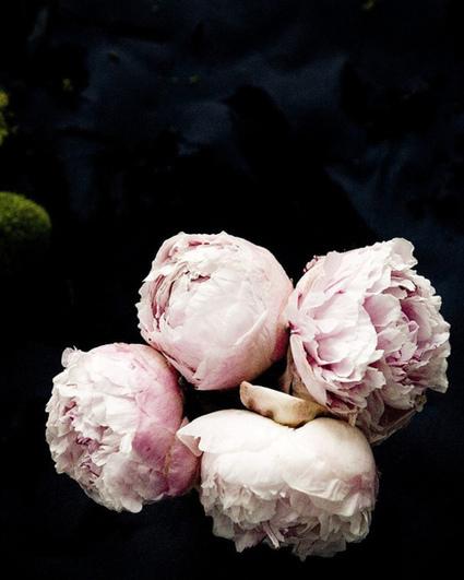 flores frescas | itfashion.com | artesaniaflorae | Scoop.it