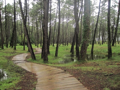 Turismo por Galicia: Que ver en... ORTIGUEIRA | Xornal do Grupo Municipal Socialista de Ortigueira | Scoop.it