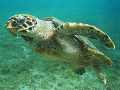 La Tortuga de Mapimí en peligro de extincion | Technology, Books and News. | Scoop.it