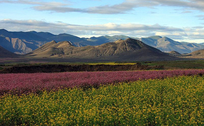 Climate change threatens Tibet's rare alpine plants | Anthropology and Climate Change | Scoop.it