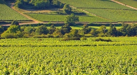 Burgundy domaine to list on UK stock exchange | Vitabella Wine Daily Gossip | Scoop.it