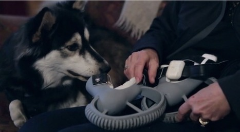 Derby The Dog Runs Again With The Help Of 3D Printed Legs | Innovation Cultures | Scoop.it
