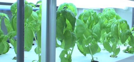 Compact hydroponic unit can grow 10,000 vegetables a year | The Authentic Food & Wine Experience | Scoop.it