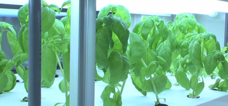 Compact hydroponic unit can grow 10,000 vegetables a year   The Authentic Food & Wine Experience   Scoop.it