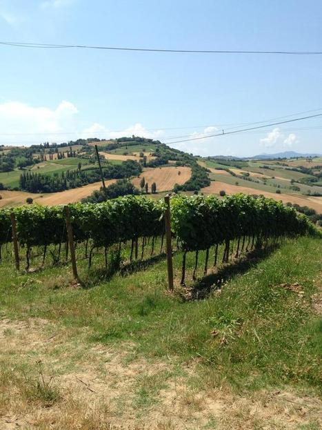 Telling Le Marche | Pottery and Wine | Le Marche another Italy | Scoop.it