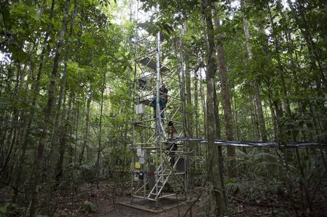 Incredible Images Of The Giant Tower Being Built In The Middle Of The Amazon | Rainforest EXPLORER:  News & Notes | Scoop.it