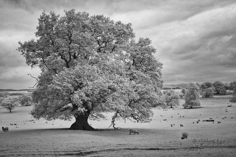 Infrared Photography with the Fujifilm X100S | Liverpool Photographer | Infrared Photography | Scoop.it