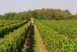 Fête des vins de Bourgueil à Tours | Agenda du vin | Scoop.it