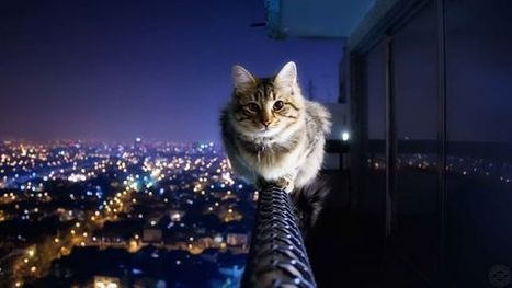 Cat On The High Roof | Animals and Birds Wallpaper | Scoop.it