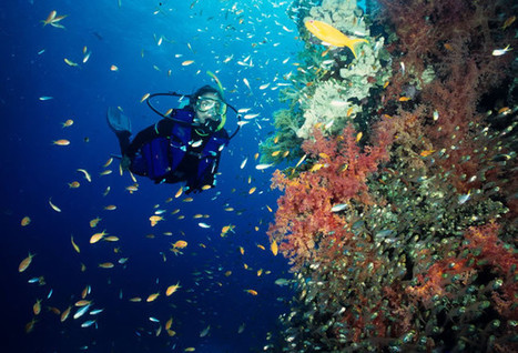 A look at the top scuba diving destinations for 2012 | blog.travelreportage.com | Scuba Dive Travel | Scoop.it