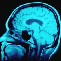 Brain Scanner Customizes Web Surfing for You | Artificial Intelligence | Scoop.it