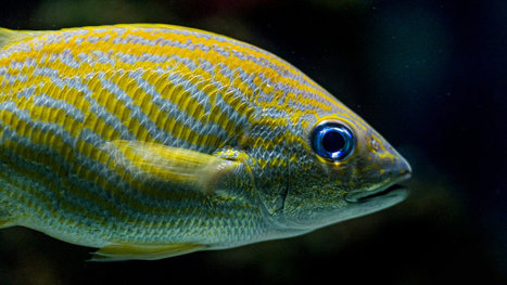 Are fish far more intelligent than we realize? | Complex Insight  - Understanding our world | Scoop.it