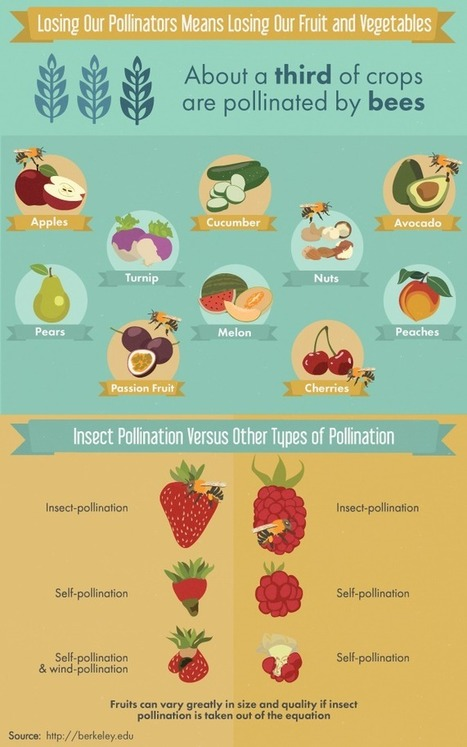 9 honeybee-friendly plants | Biodiversity protection | Scoop.it