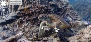 Google Street View sous la mer | ENT | Scoop.it