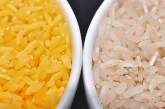 Golden Rice Opponents Should Be Held Accountable for Health Problems Linked to Vitamain A Deficiency | Guest Blog, Scientific American Blog Network | The Global Village | Scoop.it