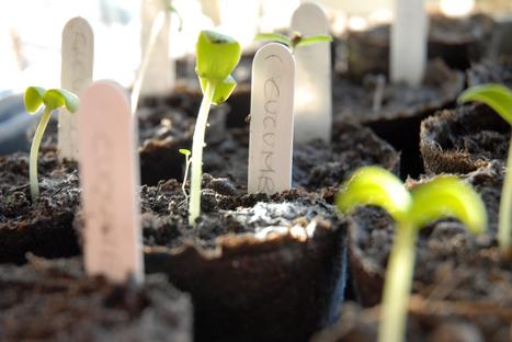 Raised Bed Vegetable Gardening – Lasagna Gardening Secrets | Best Home and Garden | Scoop.it