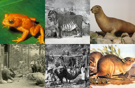 Which animal went extinct in the year you were born? | Lorraine's Environmental Change &  Management | Scoop.it