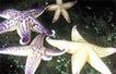 Marine Pests | What is their habitat? | Scoop.it