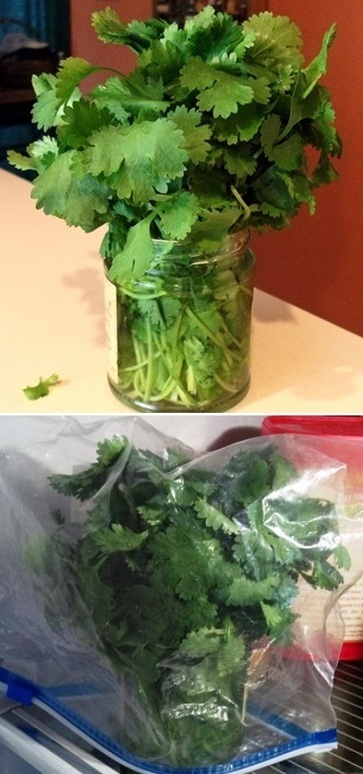 How to store fresh cilantro | Backyard Gardening | Scoop.it