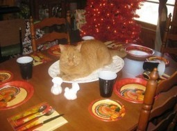16 Cats Who Celebrate Thanksgiving In Their Own Feline Way | Catnip Daily | Scoop.it