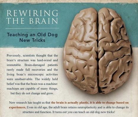An Infographic To Tell You How Your Brain Works And How To Train It | the White Samurai | Scoop.it