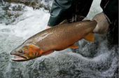 Presentation to focus on Bear River - Idaho Mountain Express and Guide | Fish Habitat | Scoop.it