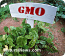 Bill Gates, Monsanto hijack 'humanitarian aid' efforts to push GMO agenda | YOUR FOOD, YOUR HEALTH: Latest on BiotechFood, GMOs, Pesticides, Chemicals, CAFOs, Industrial Food | Scoop.it