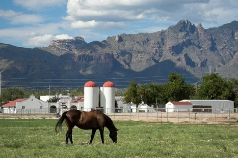 Arizona Regents Approve UA Vet School | Veterinary Practice News | CALS in the News | Scoop.it
