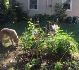 GARDEN REBELS: 10 WAYS TO SOW REVOLUTION IN YOUR BACK YARD - Occupy Monosanto 360 | Sustainable Living | Scoop.it